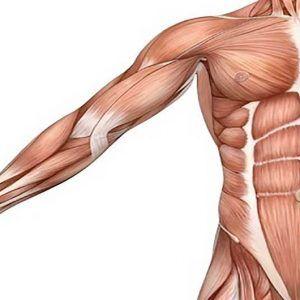 usg mięśnia
